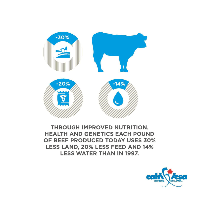 Through improved nutrition, health and genetics each pound of beef produced today uses 30% less land, 20% less feed and 14% less water than in 1997.